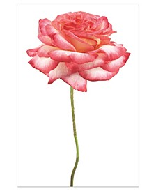 """Pink Rose on White Frameless Free Floating Tempered Glass Panel Graphic Wall Art, 48"""" x 32"""" x 0.2"""""""