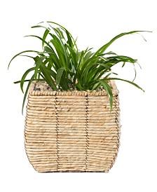 Woven Square Medium Flower Pot Planter