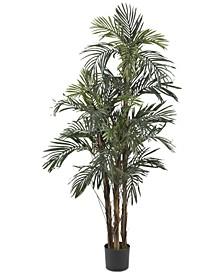 5' Robellini Palm Tree