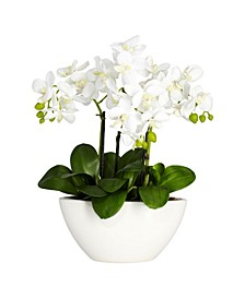 Phalaenopsis Flower Arrangement