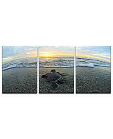 Ready2HangArt 'Turtle' 3-Pc. Canvas Art Print Set